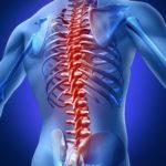 Spine Graphic